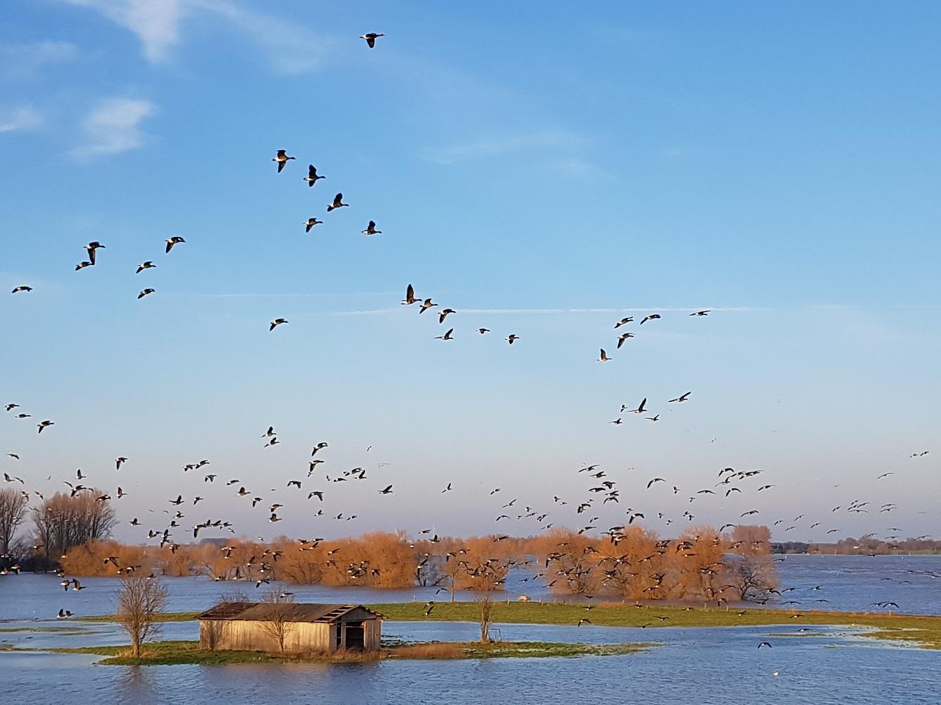 201801_Hochwasser4